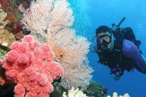 Dive & Snorkel with Poseidon - Port Douglas